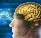 brain-wave